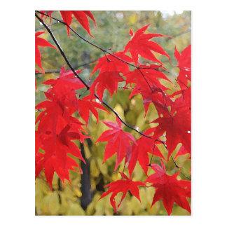 Acer palmatum 'Fireglow' Postcard