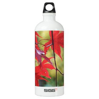 Acer palmatum 'Fireglow' Water Bottle