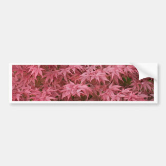 acer palmatum leaves bumper sticker