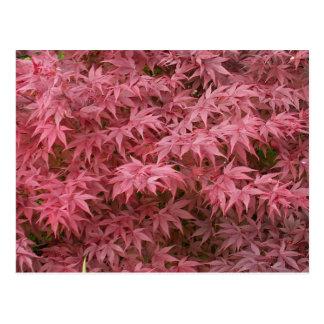 acer palmatum leaves postcard