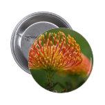 acerico-protea pin