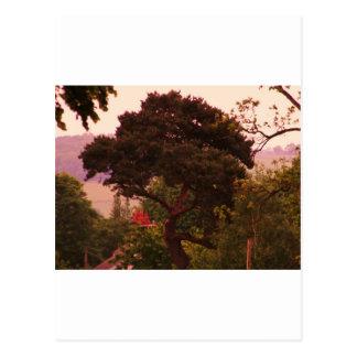 Acessories del árbol de Nidderdale Tarjetas Postales