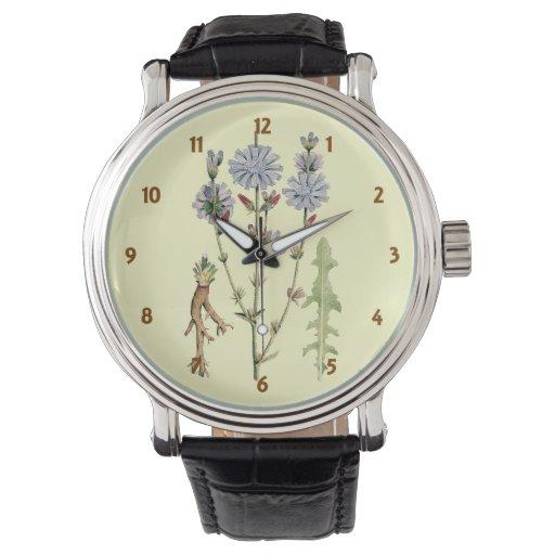 Achicoria salvaje reloj de mano