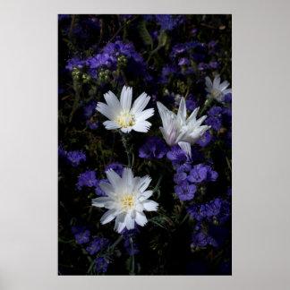 Achicoria y Wildflowers de Phacelia Póster