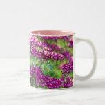 Achillea millefolium coffee mug