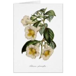 Achimenes gloxiniaeflora card