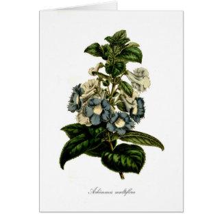 Achimenes multiflora card