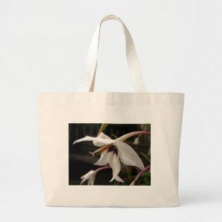 Acidanthera or Peacock Gladiolus Bags