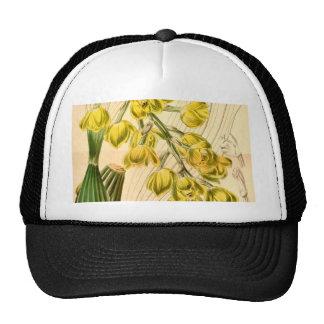 Acineta barkeri (as Peristeria barkeri) Trucker Hat