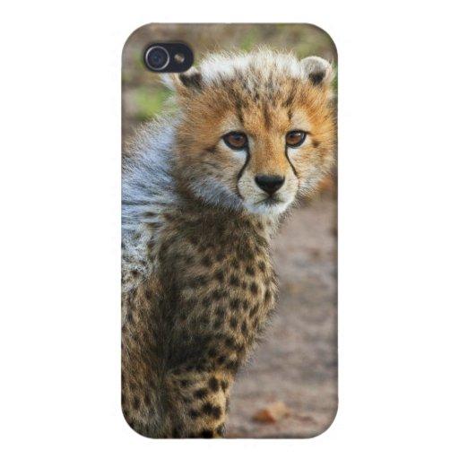 Acinonyx Jubatus de Cub del guepardo) como se ve e iPhone 4 Funda