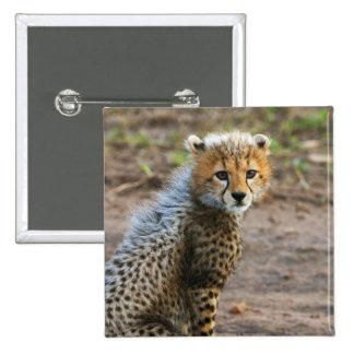 Acinonyx Jubatus de Cub del guepardo) como se ve e Pin Cuadrado