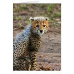 Acinonyx Jubatus de Cub del guepardo) como se ve e Tarjeta De Felicitación