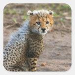 Acinonyx Jubatus de Cub del guepardo) como se ve Pegatina Cuadrada