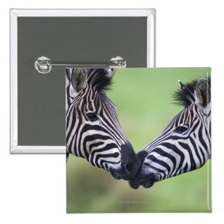 Aclara los pares de la cebra (quagga del Equus) qu Pin