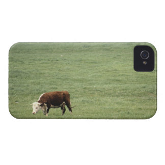 Acobarde el pasto en el prado, Nueva Escocia, iPhone 4 Case-Mate Funda