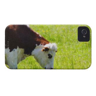 Acobarde el pasto en un campo, el valle del Loira, iPhone 4 Carcasas