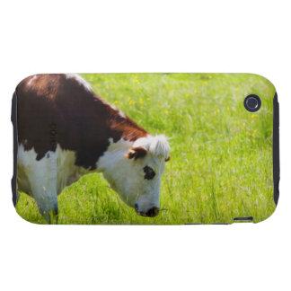 Acobarde el pasto en un campo, el valle del Loira, Tough iPhone 3 Protectores