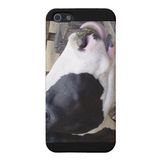 Acobarde la leche bovina del MOO que ordeña la nat iPhone 5 Cárcasas