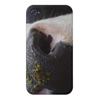 Acobarde la leche bovina del MOO que ordeña la nat iPhone 4/4S Funda
