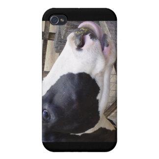 Acobarde la leche bovina del MOO que ordeña la nat iPhone 4/4S Carcasa