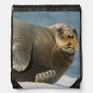 Acobarde los restos en el hielo marino que flota a mochilas