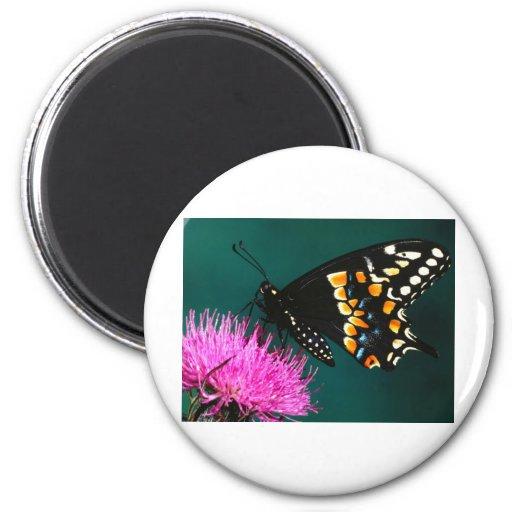 acopio de las mariposas imán redondo 5 cm