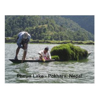 Acopio del berro en el lago Phewa Postales