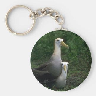 Acoplamiento agitado del albatros llaveros