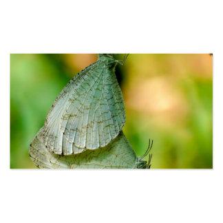 Acoplamiento de las mariposas de Leptosia Nina de Plantillas De Tarjeta De Negocio