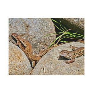 Acoplamiento de los lagartos lona estirada galerias