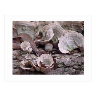 """Acorn and Fungi"" ©2006 Postcard"