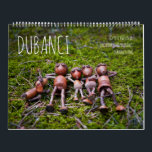 """Acorn Elves calendar with funny photos<br><div class=""""desc"""">Calendar with funny acorn elves living they live in World Wide Wood :)  With new photos,  that I did within the year 2019</div>"""
