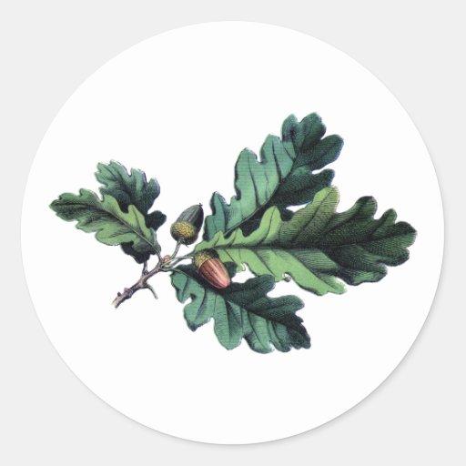 acorn oak vintage stickers