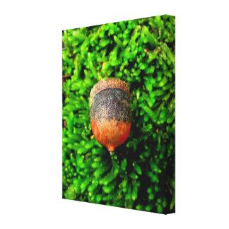 Acorn on Moss Canvas Print