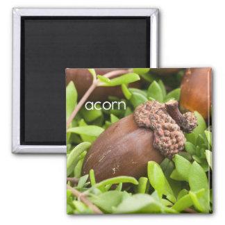 Acorn Refrigerator Magnet