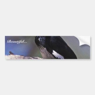 Acorn Woodpecker Car Bumper Sticker