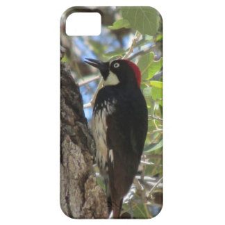 Acorn Woodpecker iPhone Case iPhone 5 Covers