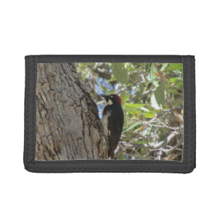 Acorn Woodpecker Trifold Wallets