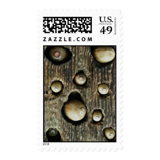 Acorns in tree foothills, High Sierra, California, Postage Stamp