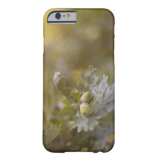 Acorns on oak tree. barely there iPhone 6 case
