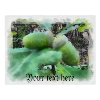 Acorns Postcard