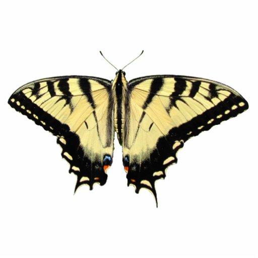 Acrílico amarillo del ~ de Swallowtail Adorno Fotoescultura