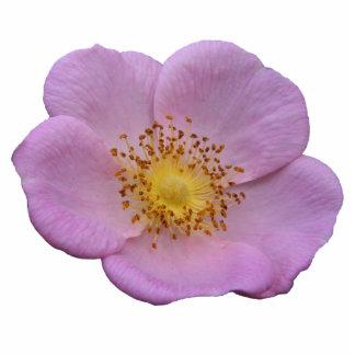 Acrílico color de rosa salvaje del ~ adorno fotoescultura