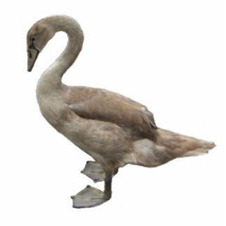 Acrílico del ~ del pollo del cisne adorno fotoescultura