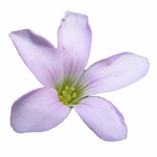 Acrílico púrpura del ~ del trébol adorno fotoescultura