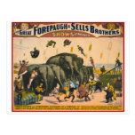 Acróbatas Forepaugh de los elefantes del circo del Tarjetas Postales