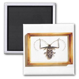 """Acrocinus longimanus"" Insect Watercolor 2 Inch Square Magnet"