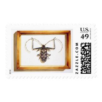 """Acrocinus longimanus"" Insect Watercolor Postage"