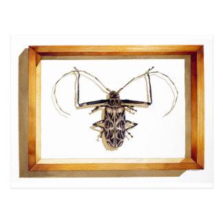"""""""Acrocinus longimanus"""" Insect Watercolor Postcard"""