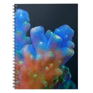 Acropora coral spiral notebooks